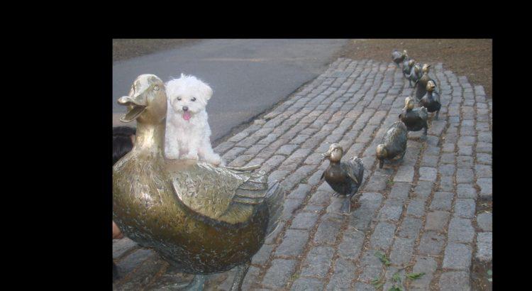 Public-Garden-Boston, MA-Make Way For Ducklings Statue-Dog-Lil Stinker